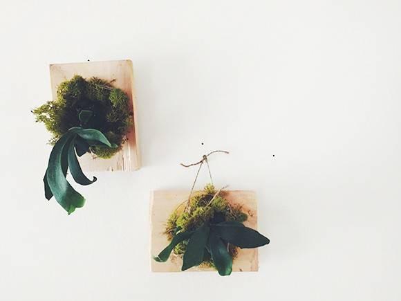 植物コウモリランを見せて壁に飾るDIY術!