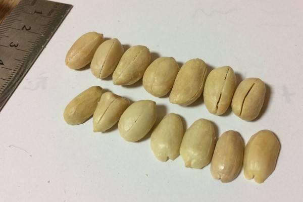 どれが本物!?リアルな木工ピーナッツ!