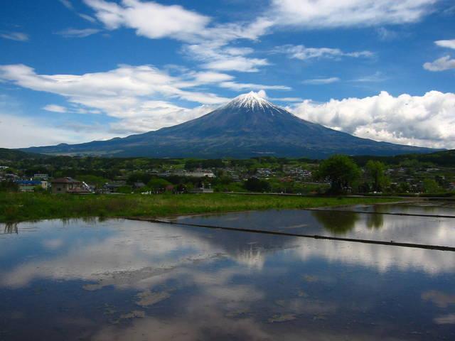 富士山麓で、鹿を捌く ~解体編~