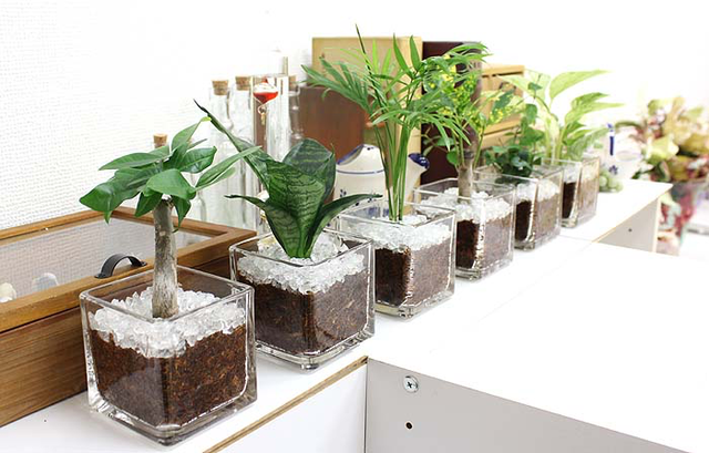 【エアプランツ】観葉植物の飾り方!壁に吊るすだけでインテリアのオシャレ度を格上げ