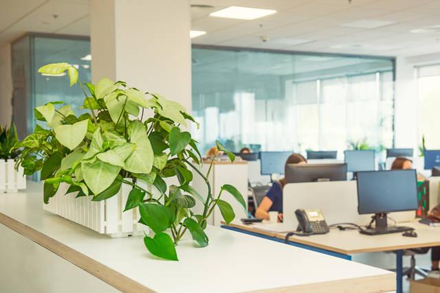 オフィスにピッタリな観葉植物は?オシャレで丈夫な植物の選び方や注意点を解説