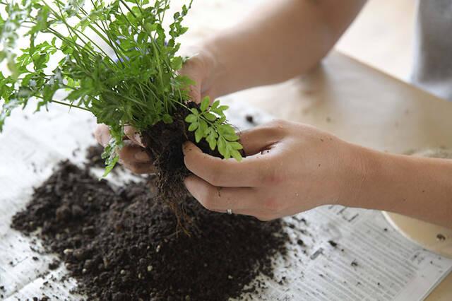 """植物は""""置かず""""に""""掛ける""""時代へ!省スペースかつおしゃれなプランターをDIY植物は""""置かず""""に""""掛ける""""時代へ!省スペースかつおしゃれなプランターをDIY"""